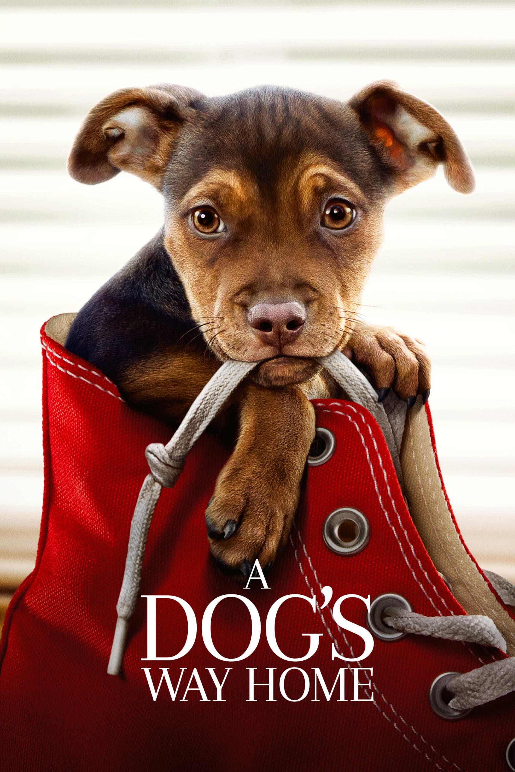 """Poster for the movie """"A Dog's Way Home"""""""